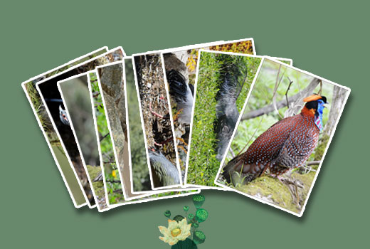 Bird / Mammal / Flora Postcards